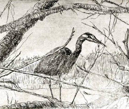 kroseth-etchings-heron-greenlake