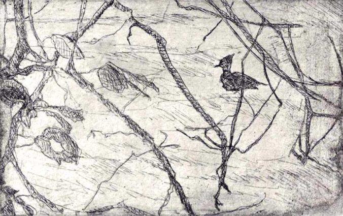 kroseth-etchings-merganser-greenlake
