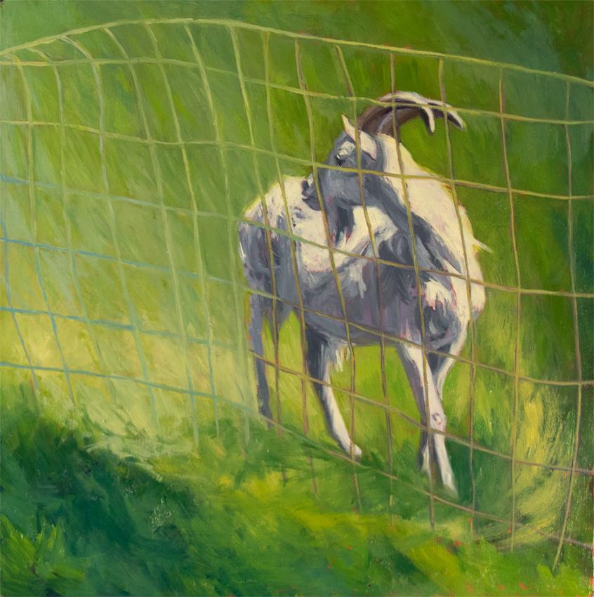 _DSC3769 turn goat 850 72px
