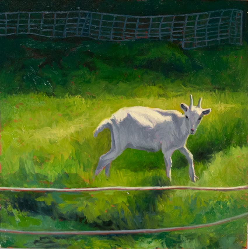 _DSC3772 ghost goat 850 72px