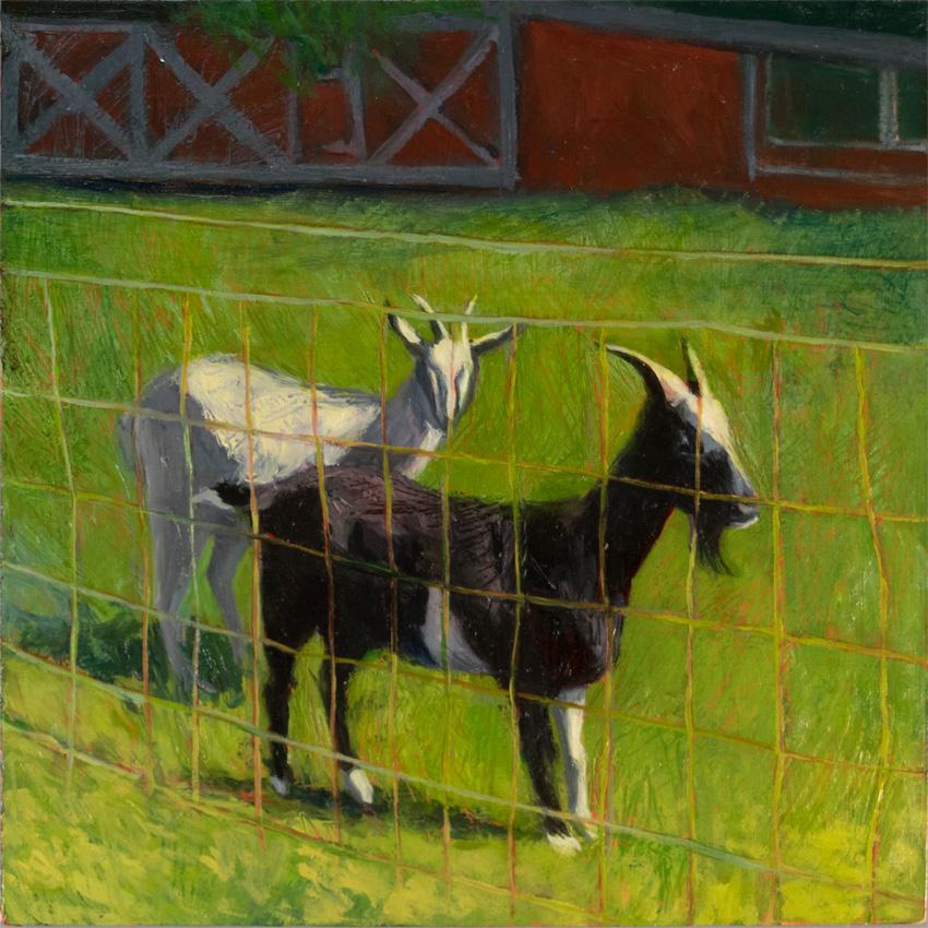 _DSC3773 barn goats 850 72px