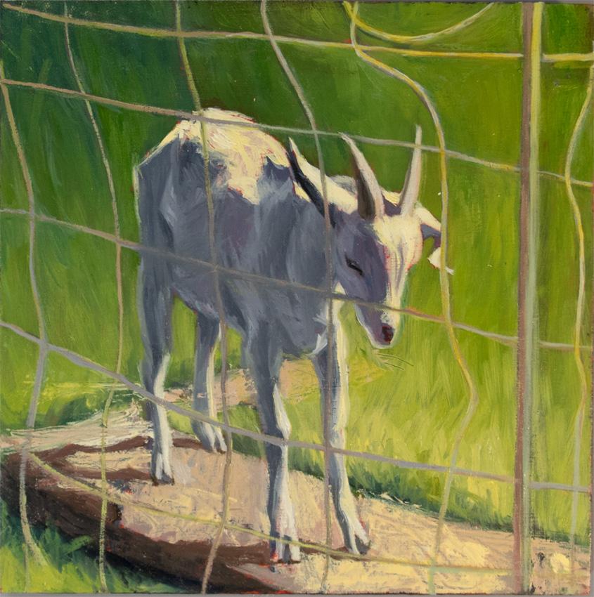 _DSC3774 scape goat 850 72px