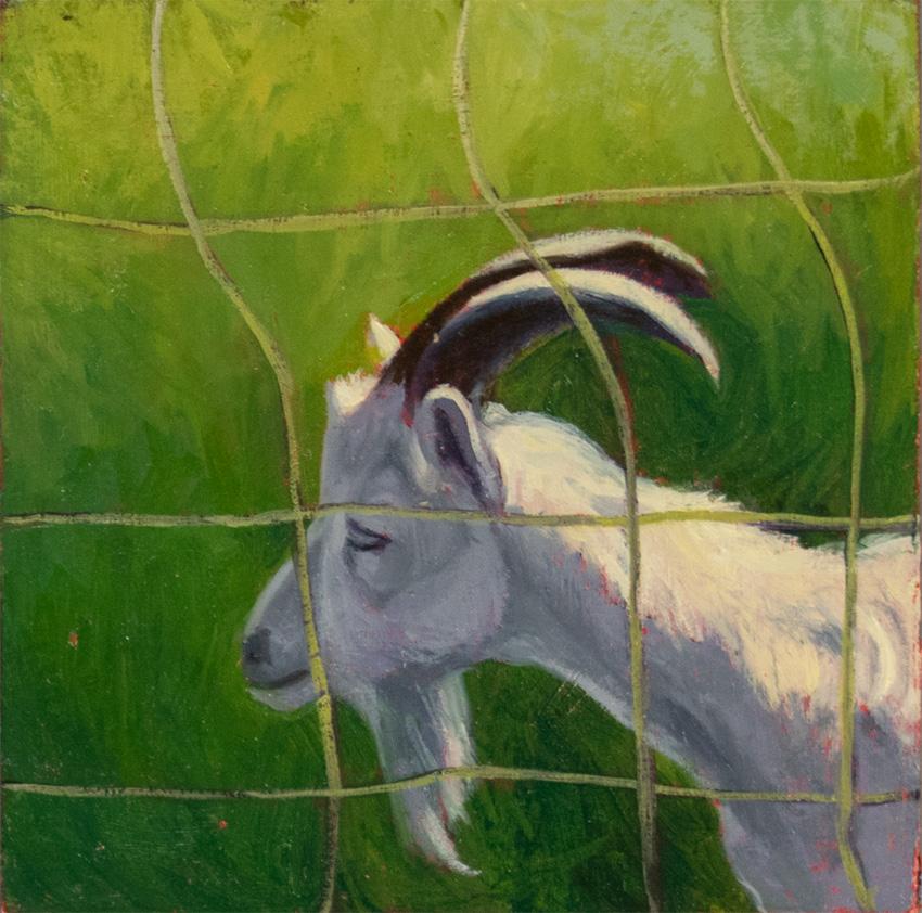 _DSC3776 sagacious goat 850 72px