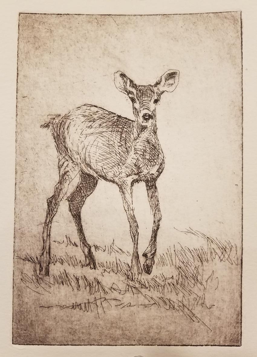 Young deer 850 72px
