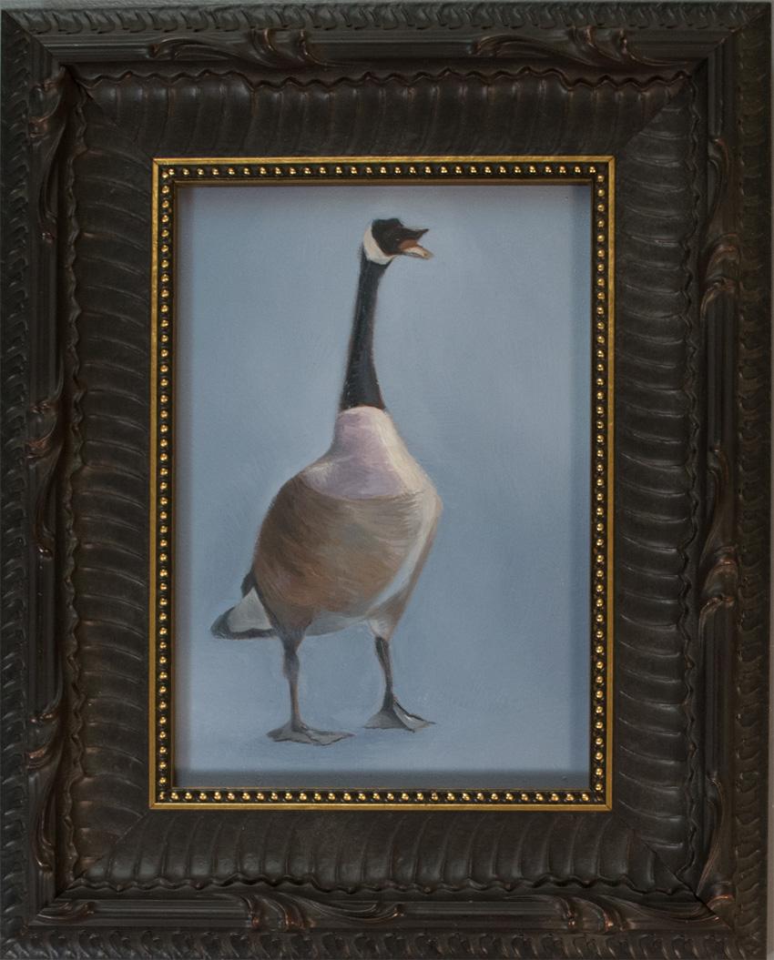 Portrait of Indignant Canada Goose 850 px 72