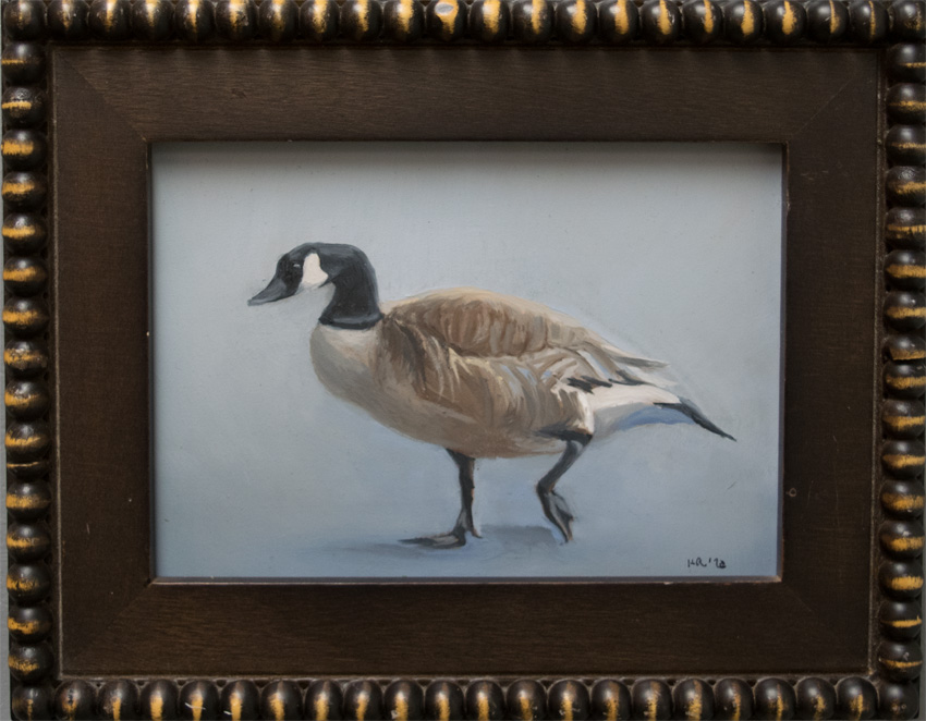 Portrait of a Canada Goose 850 px 72
